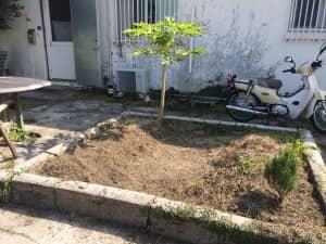 コリアンダーの種を植える場所 整地後
