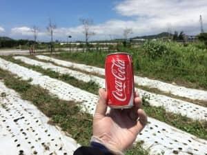 夏の圃場で飲むコーラ美味しい!