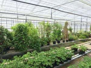 サクナなどの野草が植わったハウス