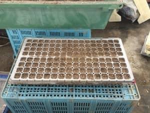 キャベツ播種のためのプラグトレイを用意
