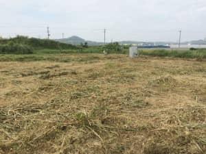 畑の草刈りがひとまず終了