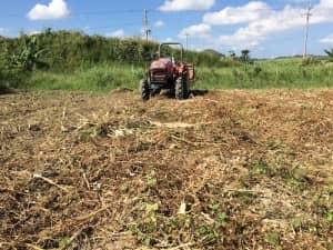 まだトラクターで鋤き込んでいない畑の表面
