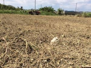 大きい石がゴロゴロある畑の表面