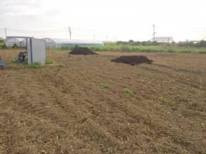 畑に置かれた牛糞半熟堆肥4トンぶん