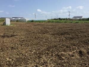 堆肥を混ぜ込んだ土