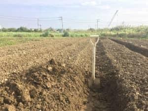 水はけの悪い畑なのでスコップで高畝を作る