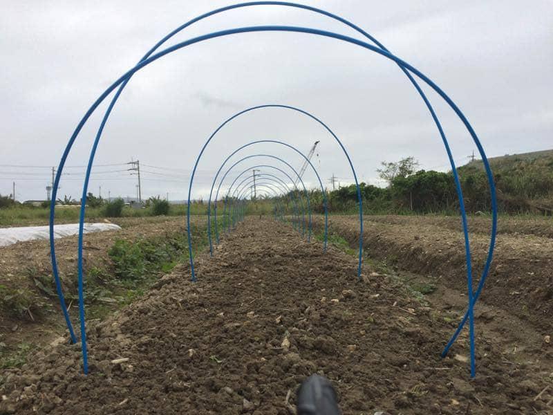トンネル栽培用の支柱を設置、グラスファイバー製支柱です