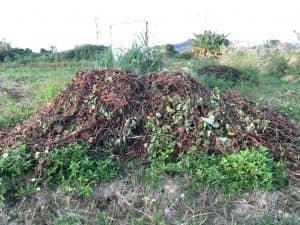 乾燥させたサツマイモのツルを邪魔にならない場所に集めた