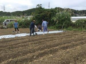 食育活動で使用する圃場のマルチ張り