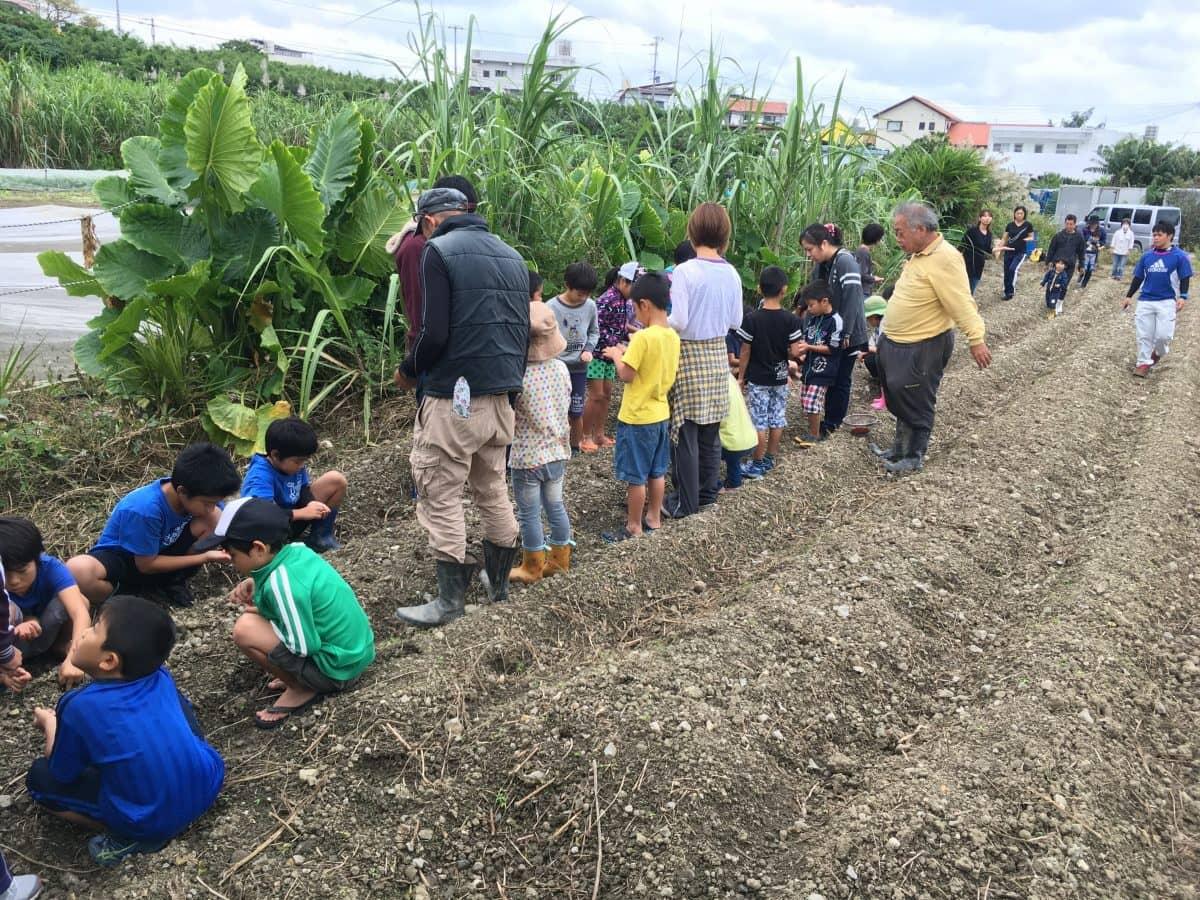 食育活動で、子供たちにトウモロコシの播種をしてもらう