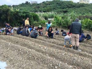 食育活動で、子供たちにジャガイモの植付けをしてもらう