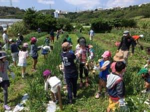 子供たちのタマネギ収穫体験