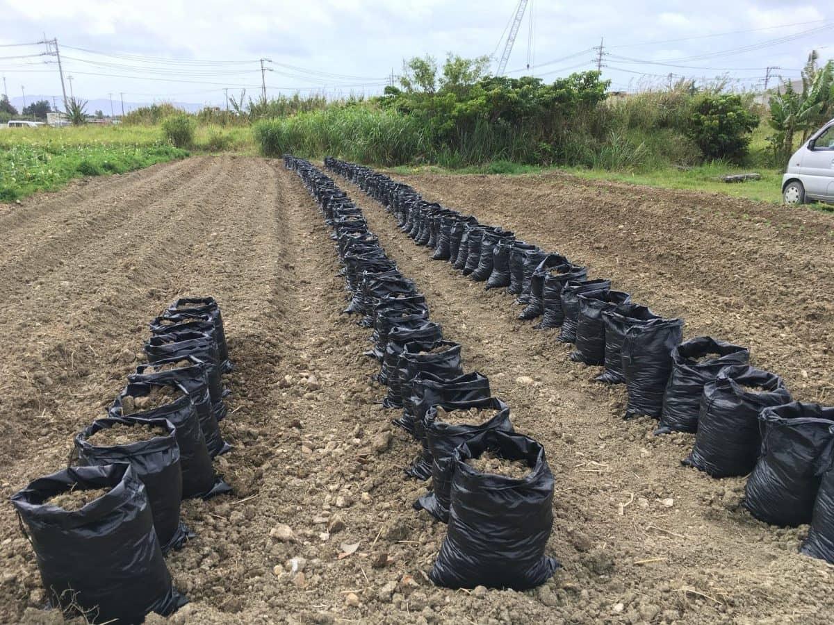 200袋の土嚢を制作。これでサツマイモを袋栽培します